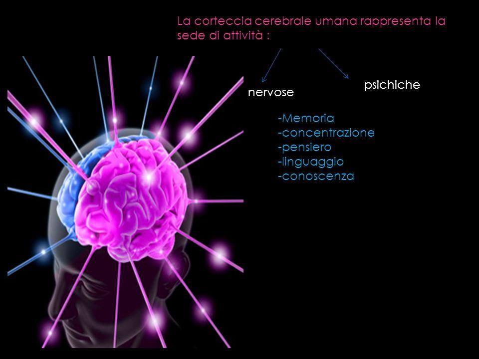 La corteccia cerebrale umana rappresenta la sede di attività :