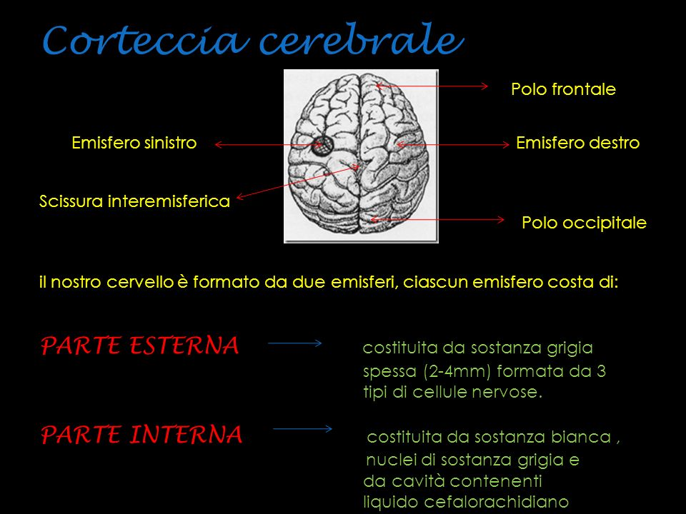 Corteccia cerebrale PARTE ESTERNA costituita da sostanza grigia