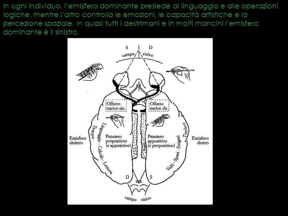 In ogni individuo, l'emisfero dominante presiede al linguaggio e alle operazioni logiche, mentre l'altro controlla le emozioni, le capacità artistiche e la percezione spaziale.
