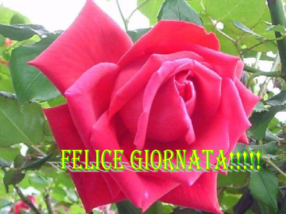 FELICE GIORNATA!!!!!