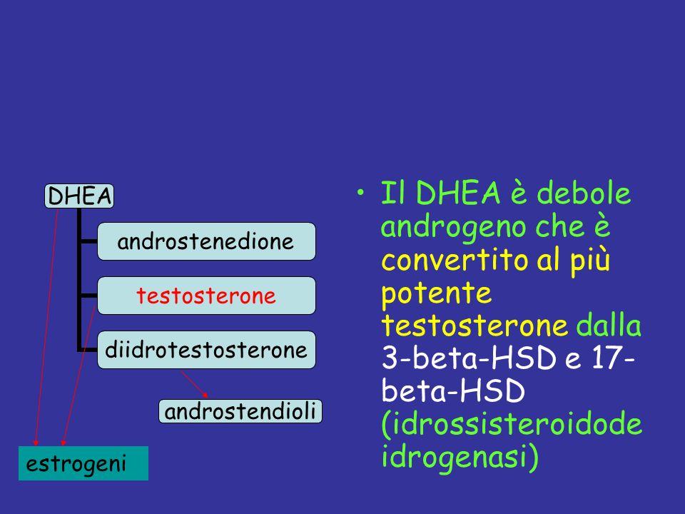 Il DHEA è debole androgeno che è convertito al più potente testosterone dalla 3-beta-HSD e 17- beta-HSD (idrossisteroidodeidrogenasi)