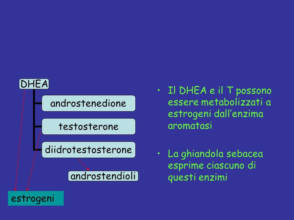 Il DHEA e il T possono essere metabolizzati a estrogeni dall'enzima aromatasi