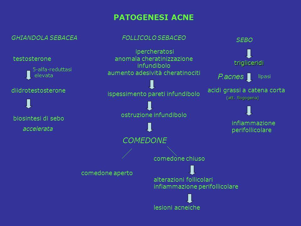 PATOGENESI ACNE P.acnes COMEDONE GHIANDOLA SEBACEA testosterone