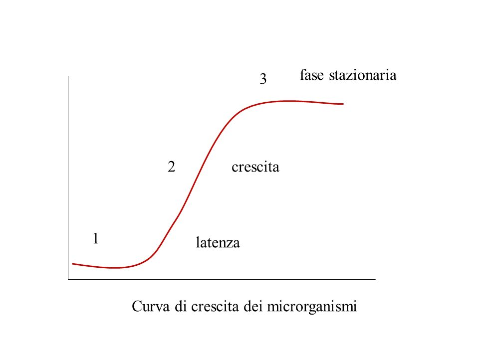 fase stazionaria 3 2 crescita 1 latenza Curva di crescita dei microrganismi