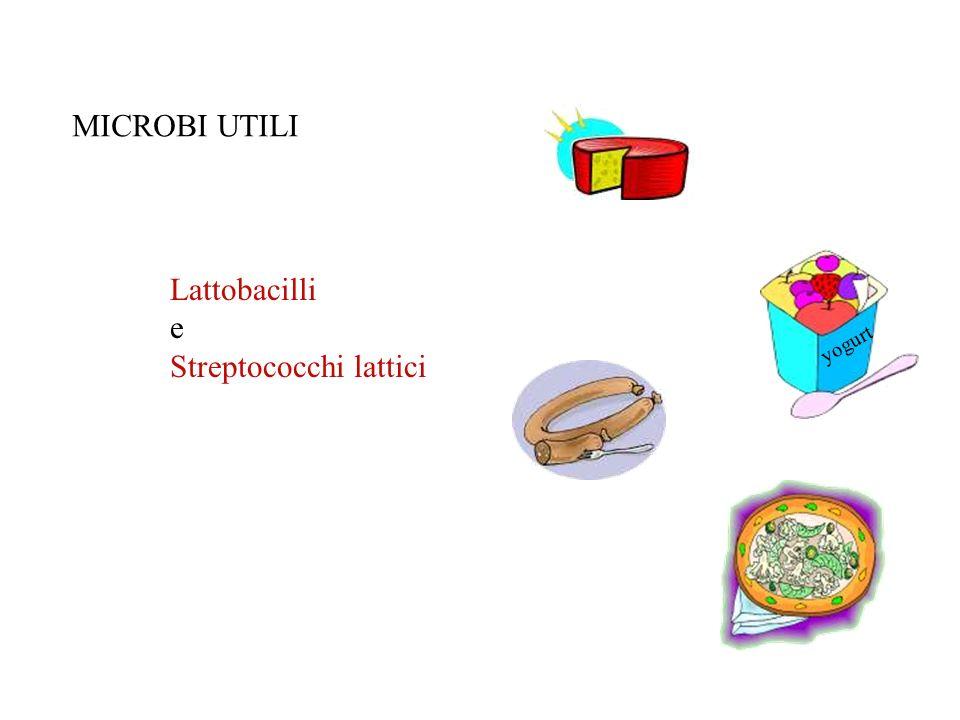 Streptococchi lattici