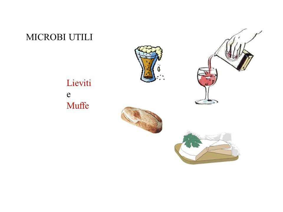 MICROBI UTILI Lieviti e Muffe