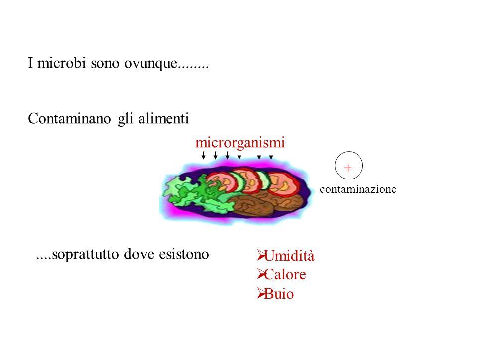 Contaminano gli alimenti