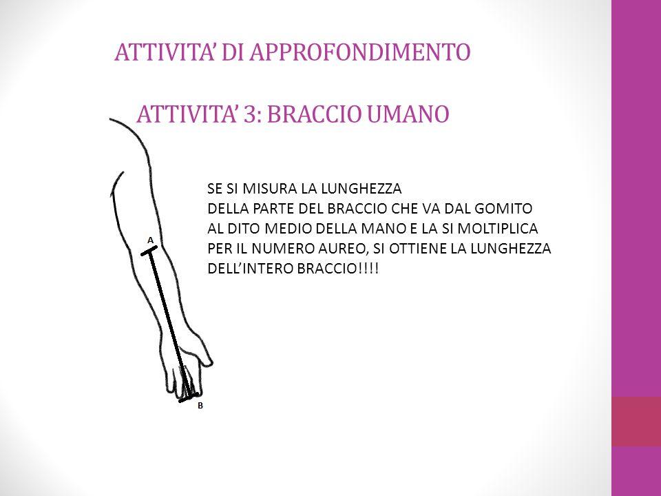ATTIVITA' DI APPROFONDIMENTO ATTIVITA' 3: BRACCIO UMANO