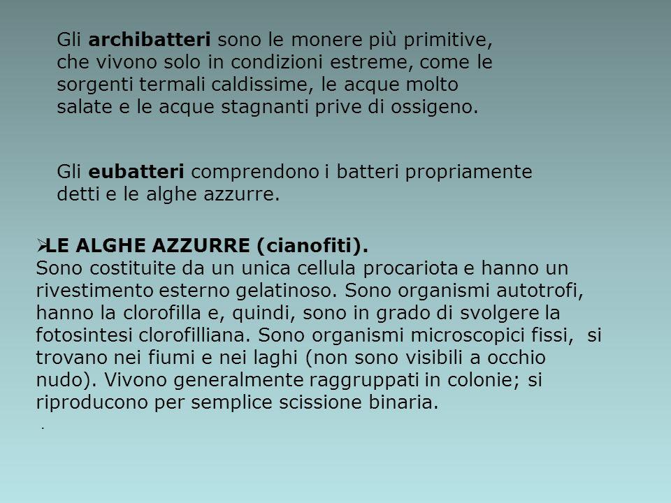 LE ALGHE AZZURRE (cianofiti).