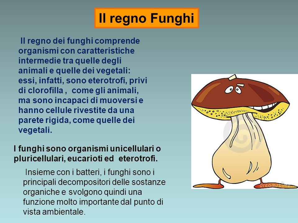Il regno Funghi