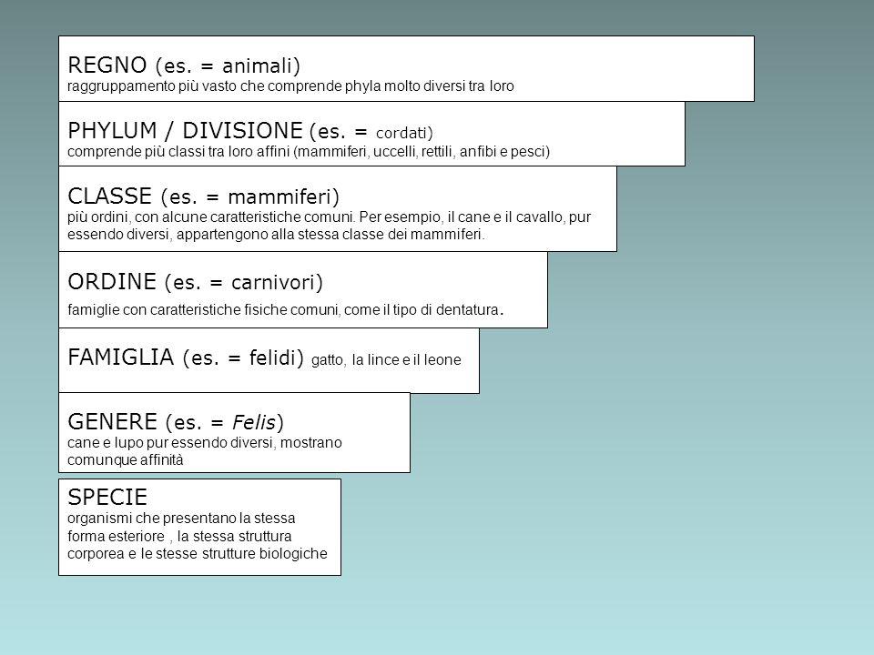 PHYLUM / DIVISIONE (es. = cordati)