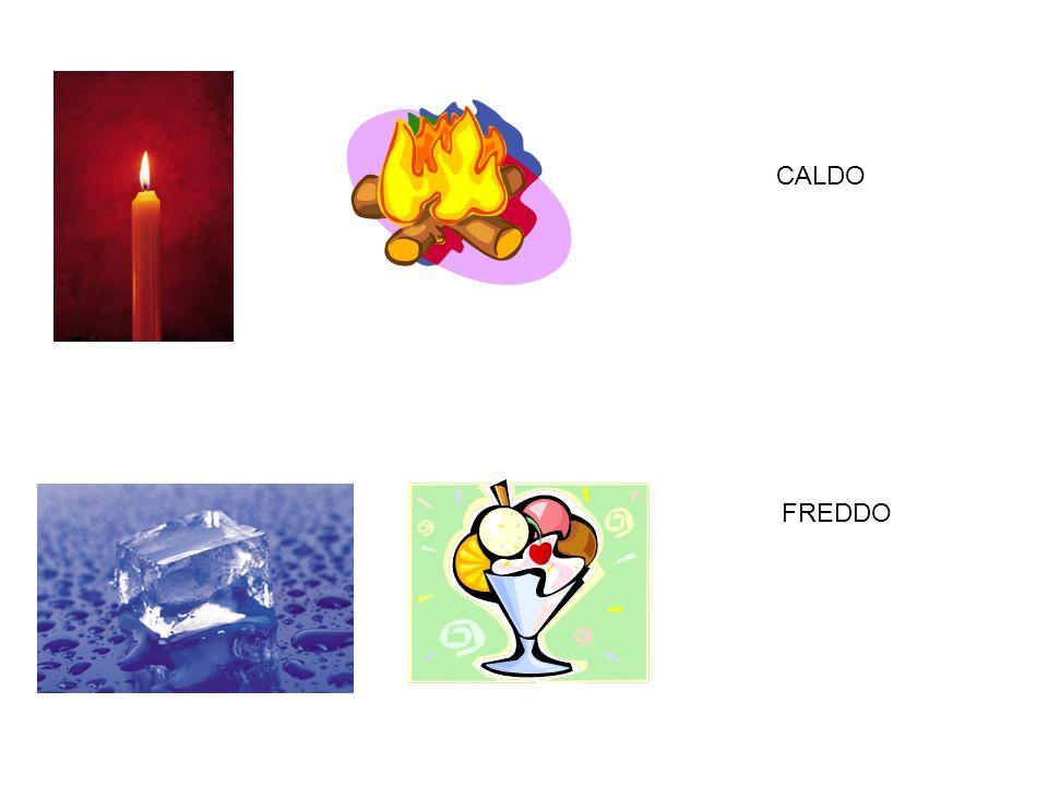 CALDO FREDDO