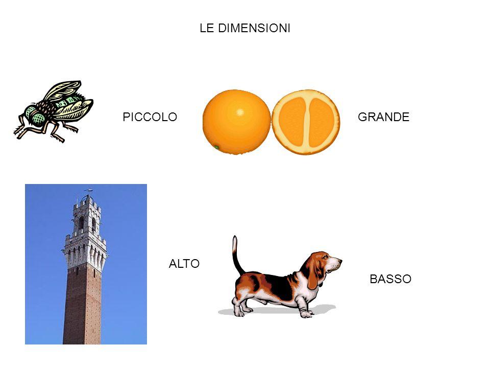 LE DIMENSIONI PICCOLO GRANDE ALTO BASSO