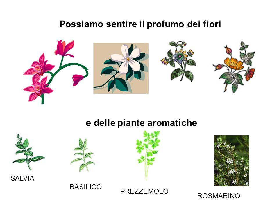 Possiamo sentire il profumo dei fiori e delle piante aromatiche