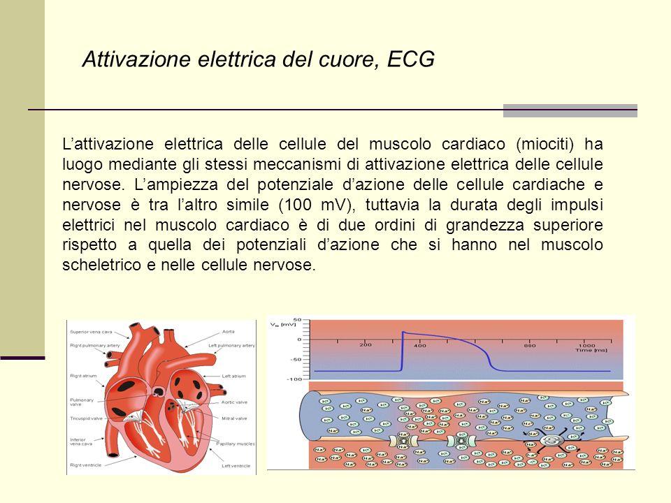 Attivazione elettrica del cuore, ECG