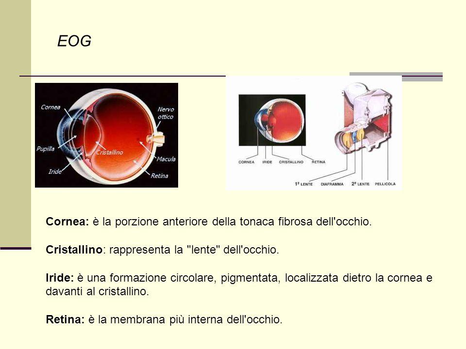 EOG Cornea: è la porzione anteriore della tonaca fibrosa dell occhio.