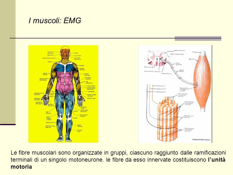 I muscoli: EMG