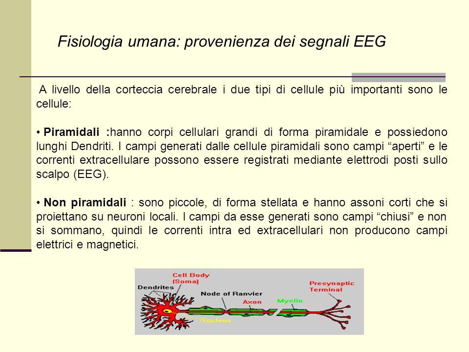 Fisiologia umana: provenienza dei segnali EEG