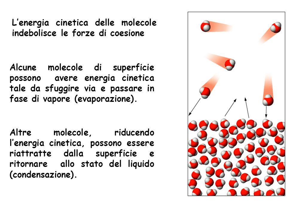 L'energia cinetica delle molecole indebolisce le forze di coesione