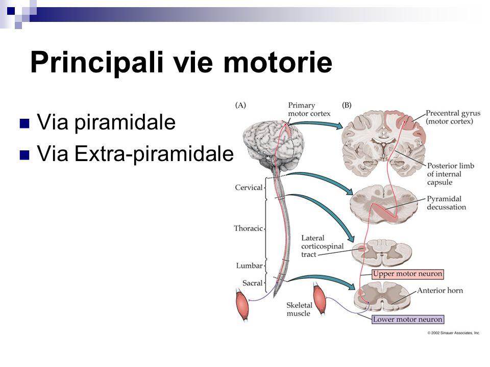 Principali vie motorie