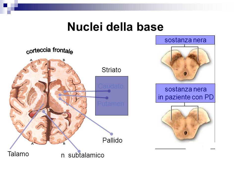 Nuclei della base sostanza nera Striato Caudato sostanza nera