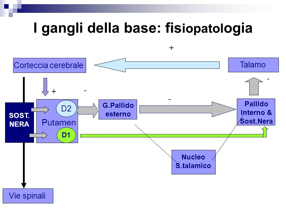 I gangli della base: fisiopatologia