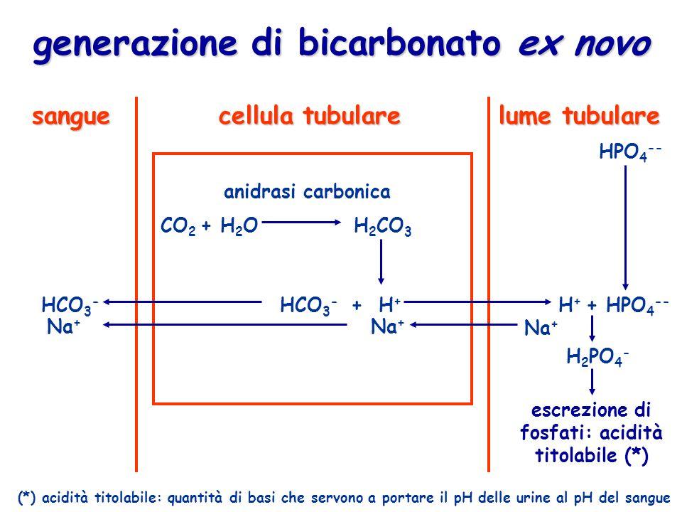 generazione di bicarbonato ex novo