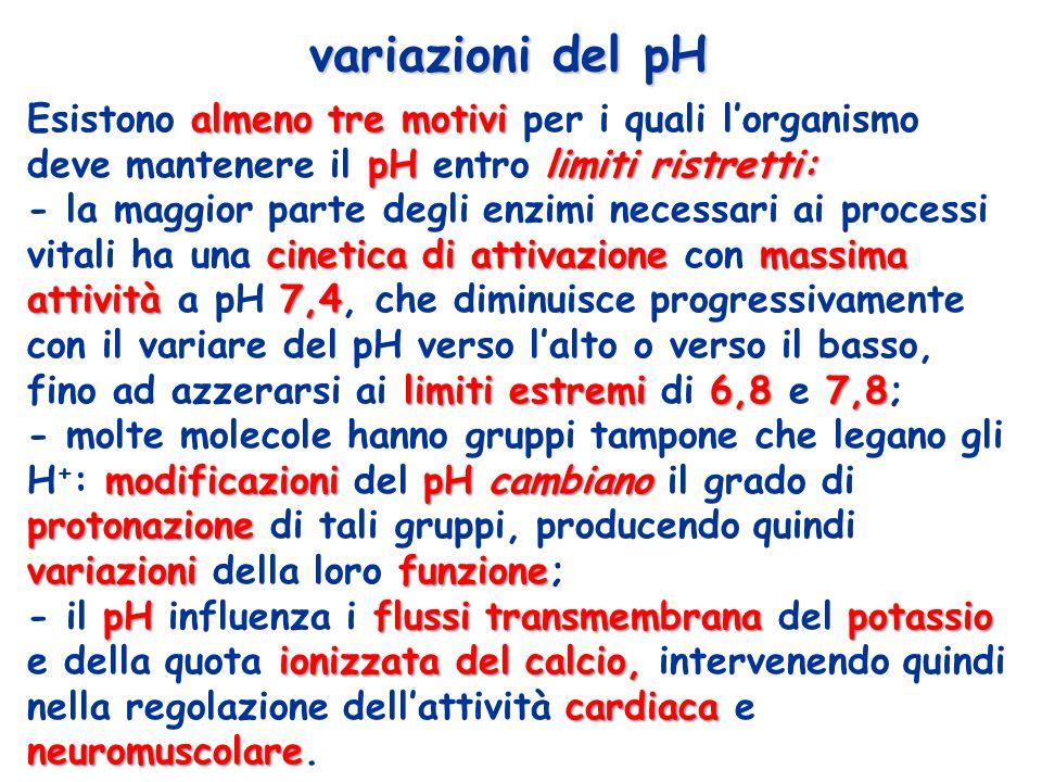 variazioni del pH Esistono almeno tre motivi per i quali l'organismo deve mantenere il pH entro limiti ristretti: