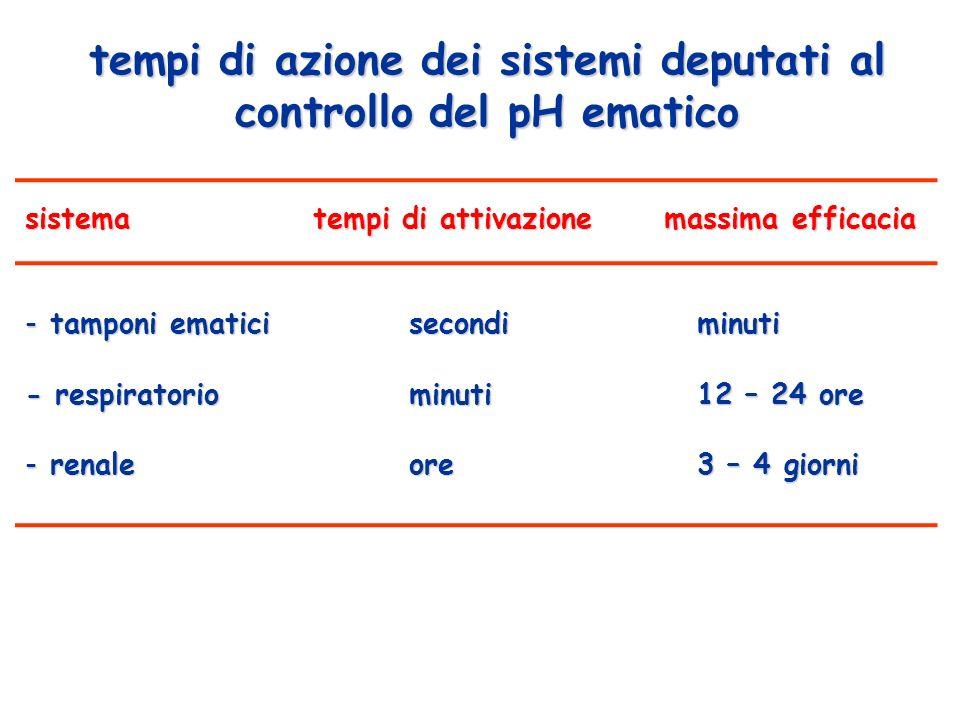 tempi di azione dei sistemi deputati al controllo del pH ematico