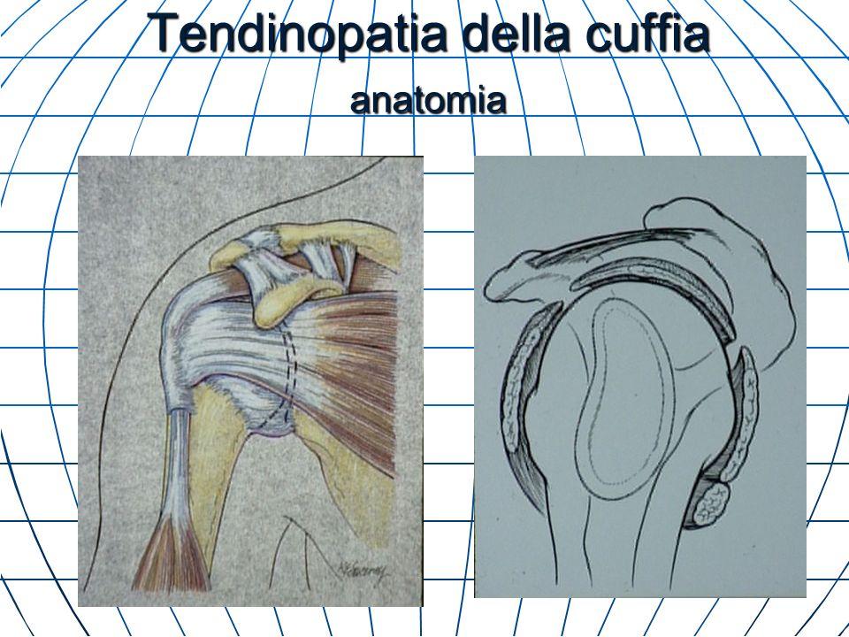Tendinopatia della cuffia anatomia
