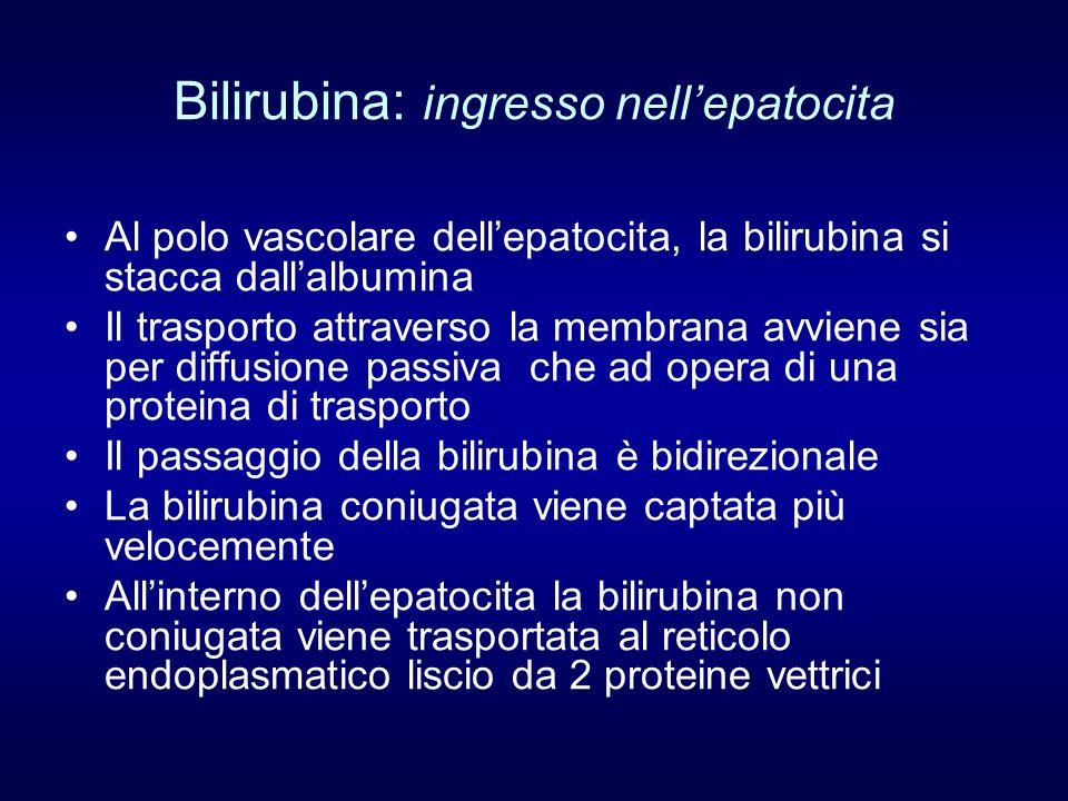 Bilirubina: ingresso nell'epatocita