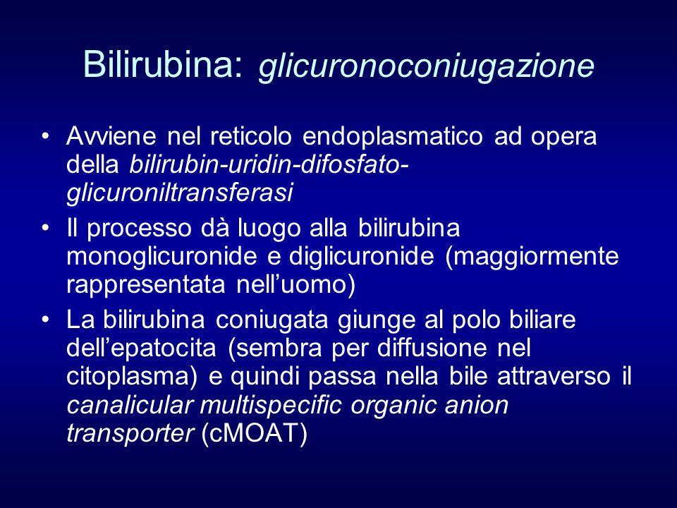 Bilirubina: glicuronoconiugazione