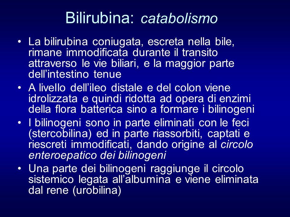 Bilirubina: catabolismo