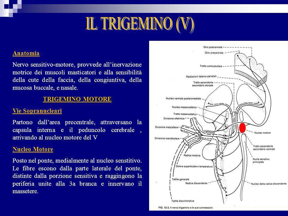 IL TRIGEMINO (V) Anatomia