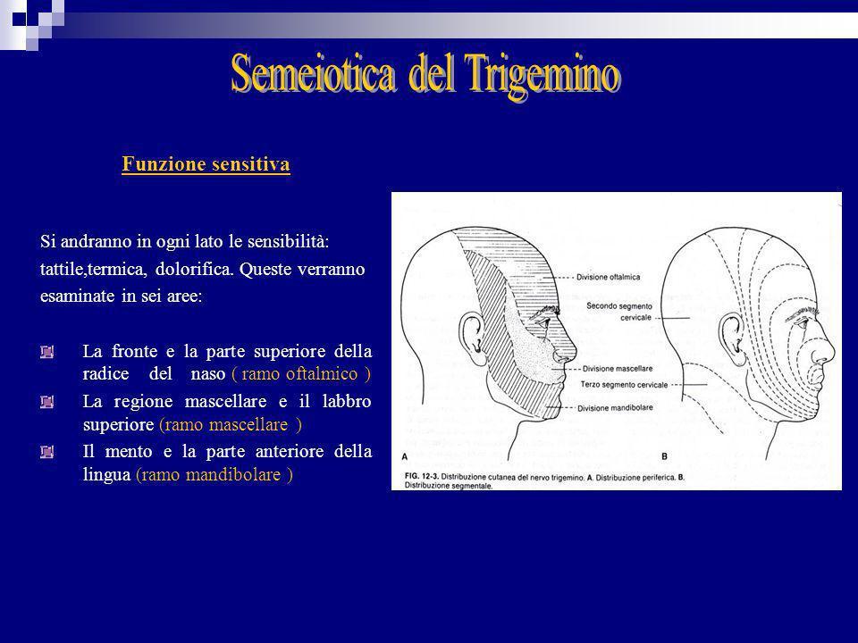 Semeiotica del Trigemino