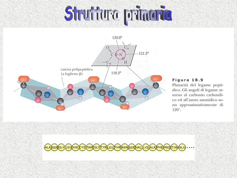 Struttura primaria