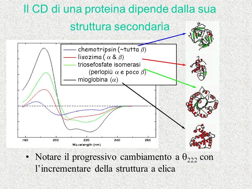 Il CD di una proteina dipende dalla sua struttura secondaria