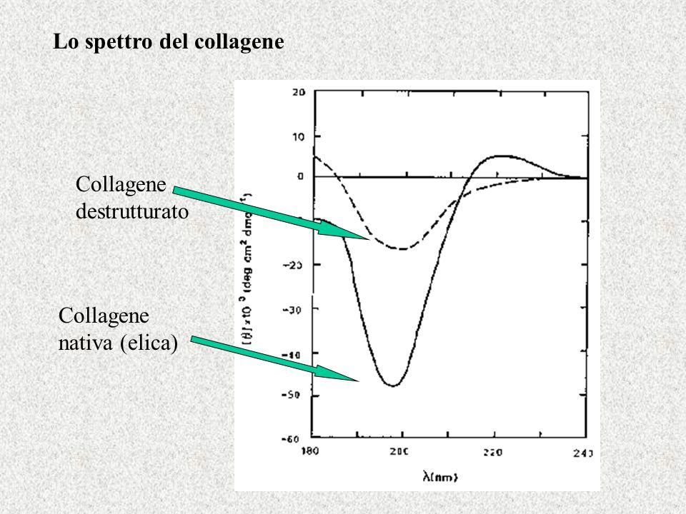 Lo spettro del collagene