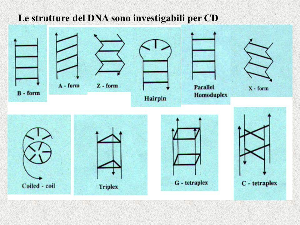Le strutture del DNA sono investigabili per CD
