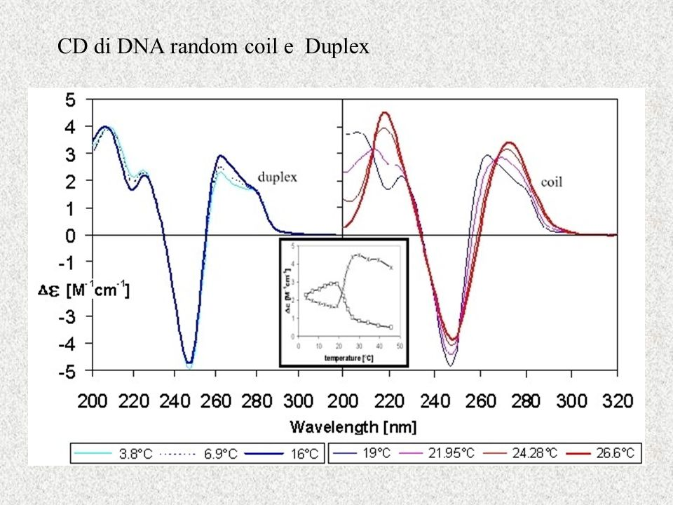 CD di DNA random coil e Duplex