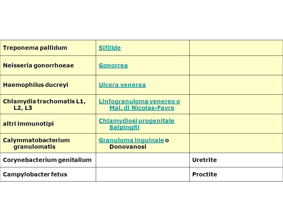 Treponema pallidum Sifilide. Neisseria gonorrhoeae. Gonorrea. Haemophilus ducreyi. Ulcera venerea.