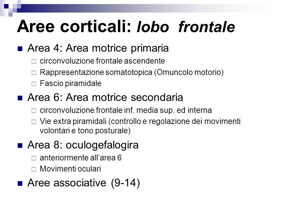 Aree corticali: lobo frontale