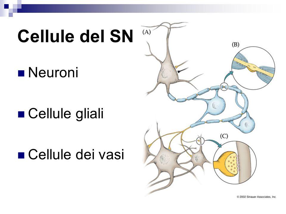 Cellule del SNC Neuroni Cellule gliali Cellule dei vasi