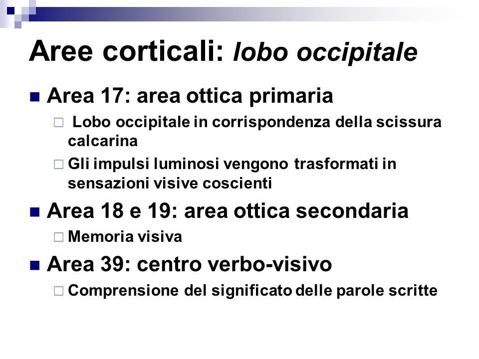 Aree corticali: lobo occipitale