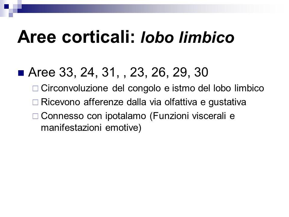 Aree corticali: lobo limbico