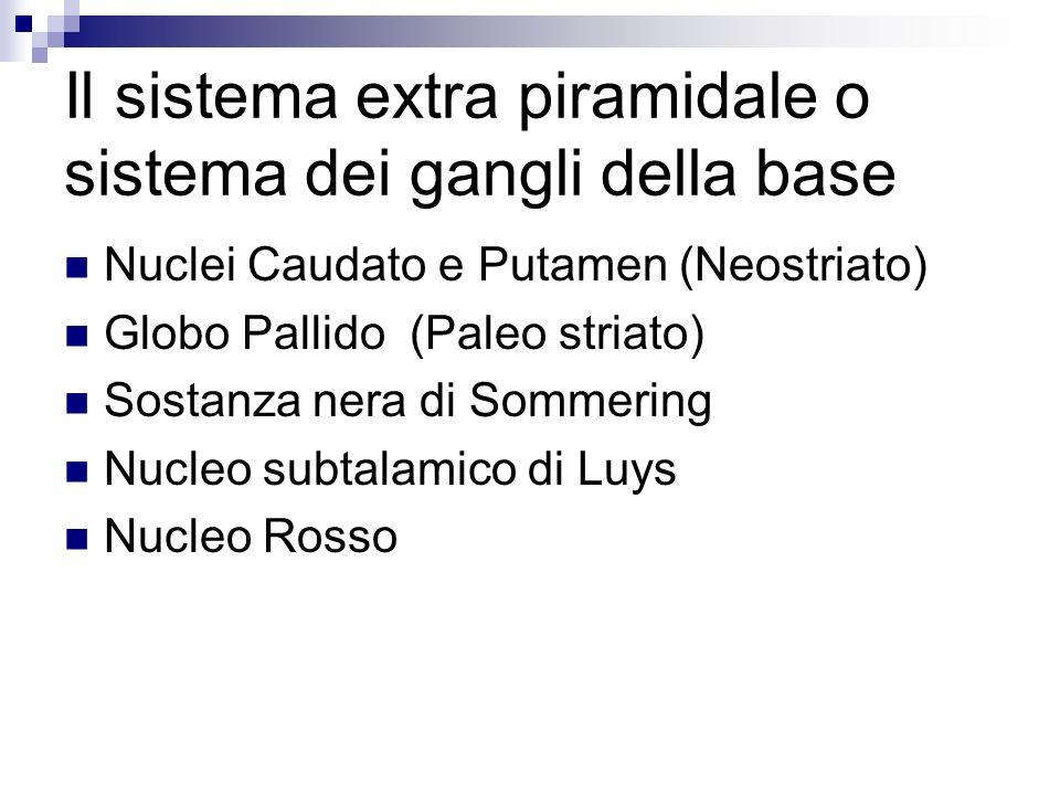 Il sistema extra piramidale o sistema dei gangli della base
