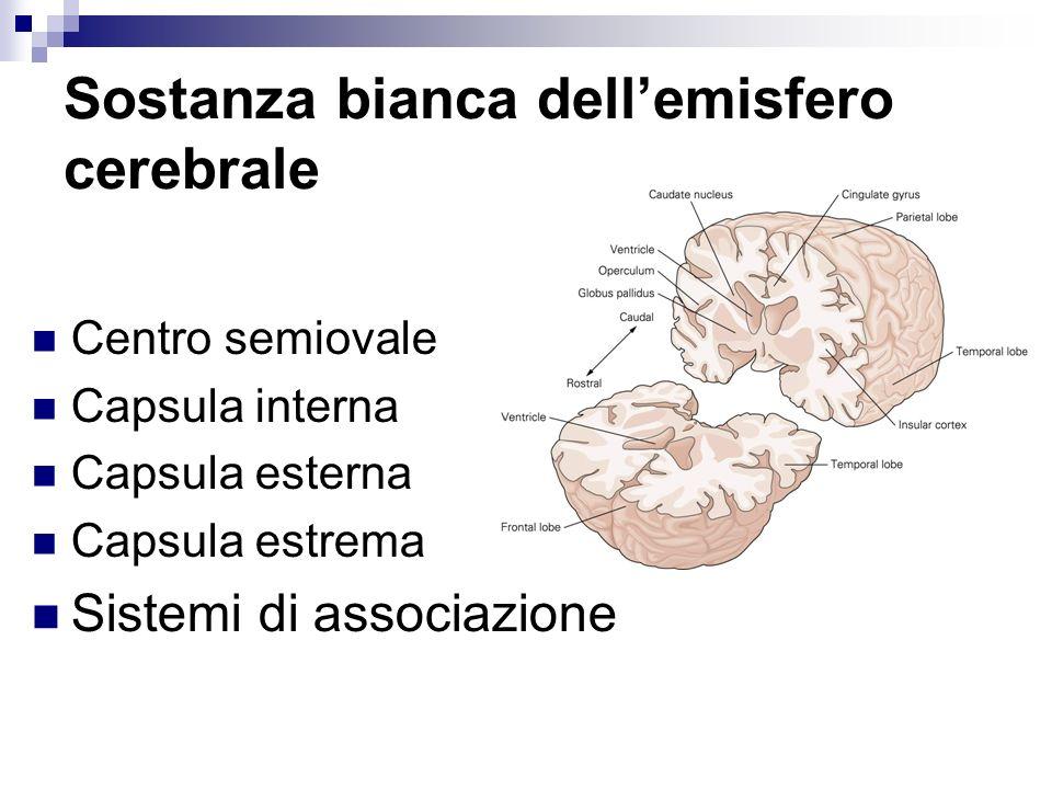 Sostanza bianca dell'emisfero cerebrale