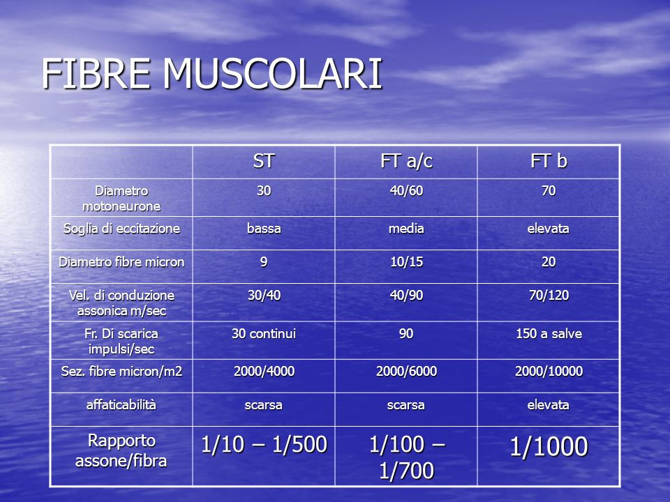FIBRE MUSCOLARI 1/1000 1/10 – 1/500 1/100 – 1/700 ST FT a/c FT b