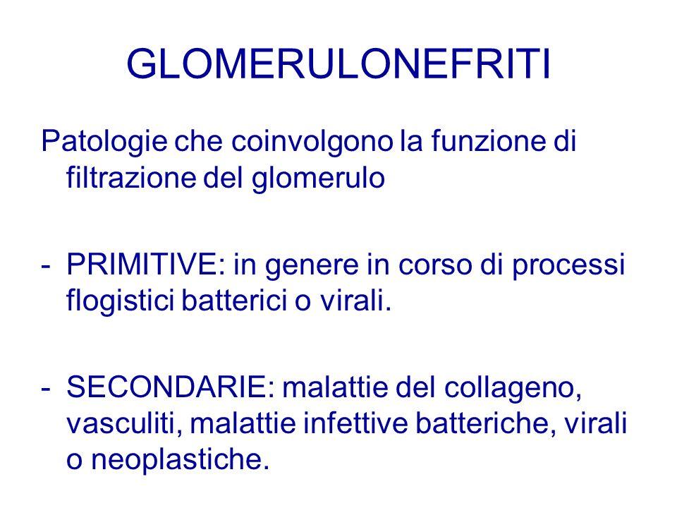 GLOMERULONEFRITI Patologie che coinvolgono la funzione di filtrazione del glomerulo.