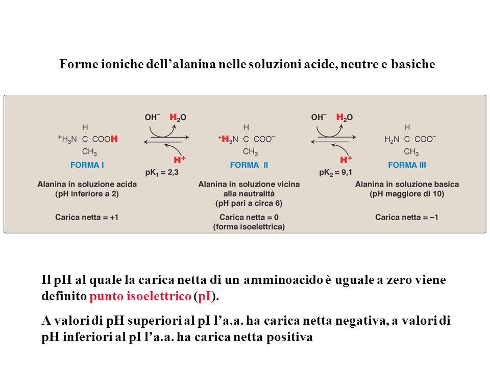Forme ioniche dell'alanina nelle soluzioni acide, neutre e basiche
